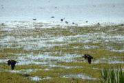 Moritos en la marisma de Doñana