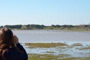 Observación de aves con niños en Doñana