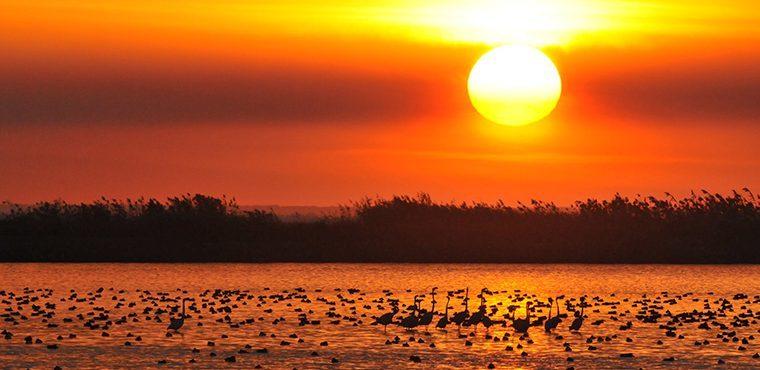 Amanecer en las marismas de Doñana