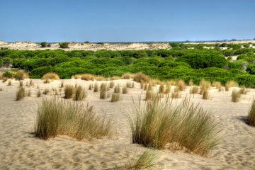 Fotografía de Doñana. Sistema dunar