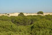 Dunas y corrales en Doñana