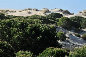 Mobile dunes in Doñana