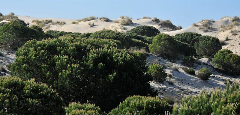 Mobile dunes in Doñana