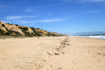 Playa del Asperillo Doñana