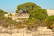 Corrales de Doñana