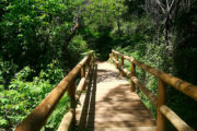 Sendero de La Rocina Doñana