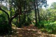 Bosque de ribera La Rocina Doñana