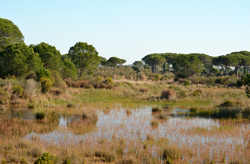 Doñana Lagunas del Acebuche