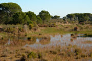 Lagunas del Acebuche Doñana