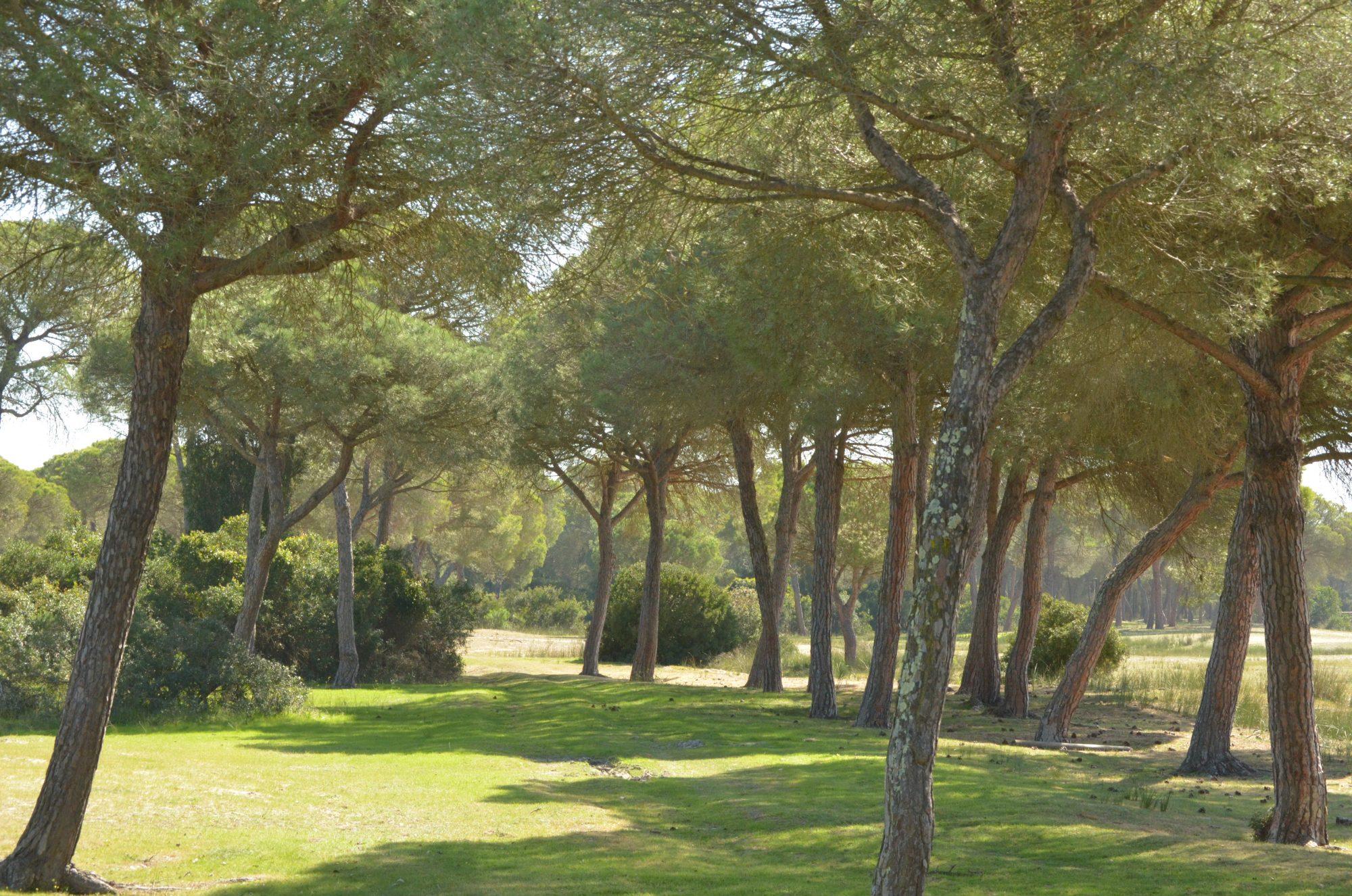 Cotos de Doñana