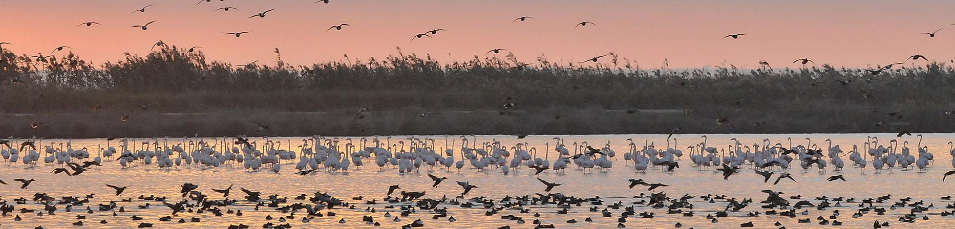 Observación de aves en las marismas de Doñana