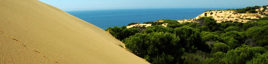 Doñana landscape
