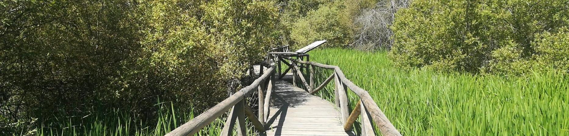 Doñana La Rocina