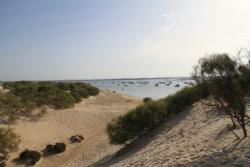 Caño de Sancti Petri - Bahía de Cádiz