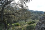 Encinares Sierra de Aracena