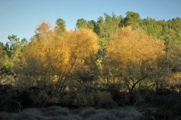 Riberas de Aracena