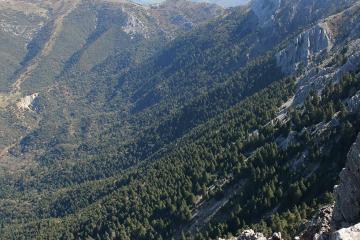 El pinsapar Sierra de Grazalema