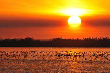 Dawn in Guadalquivir marshes