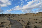 Fotografía del sendero dunar en Doñana