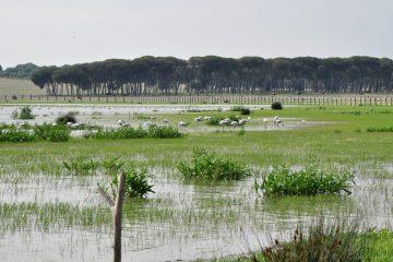 Dehesa de abajo Doñana Norte