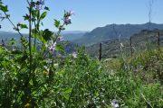 Parque Natural Sierra de Grazalema