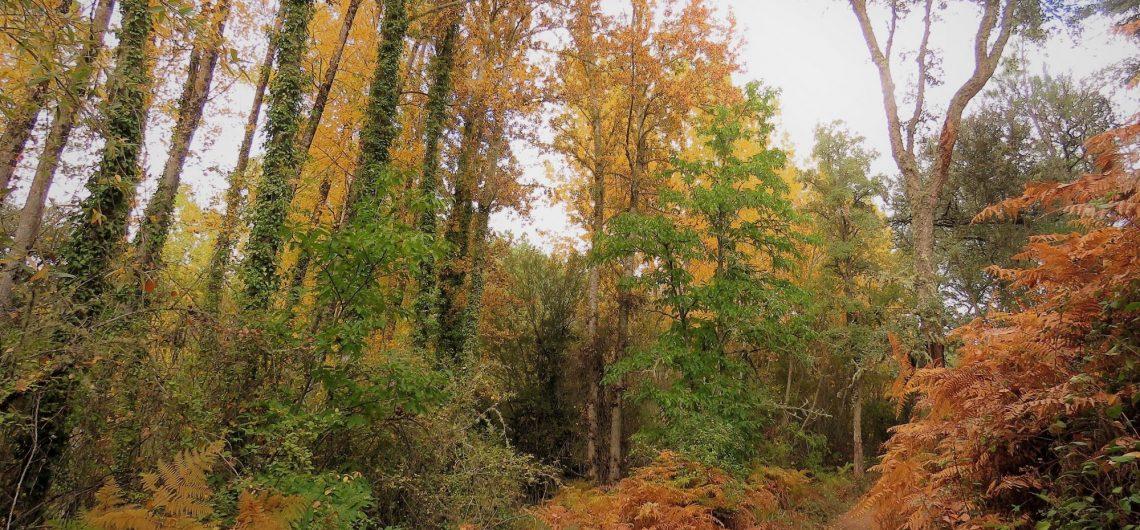 Rutas para disfrutar del otoño en Andalucía