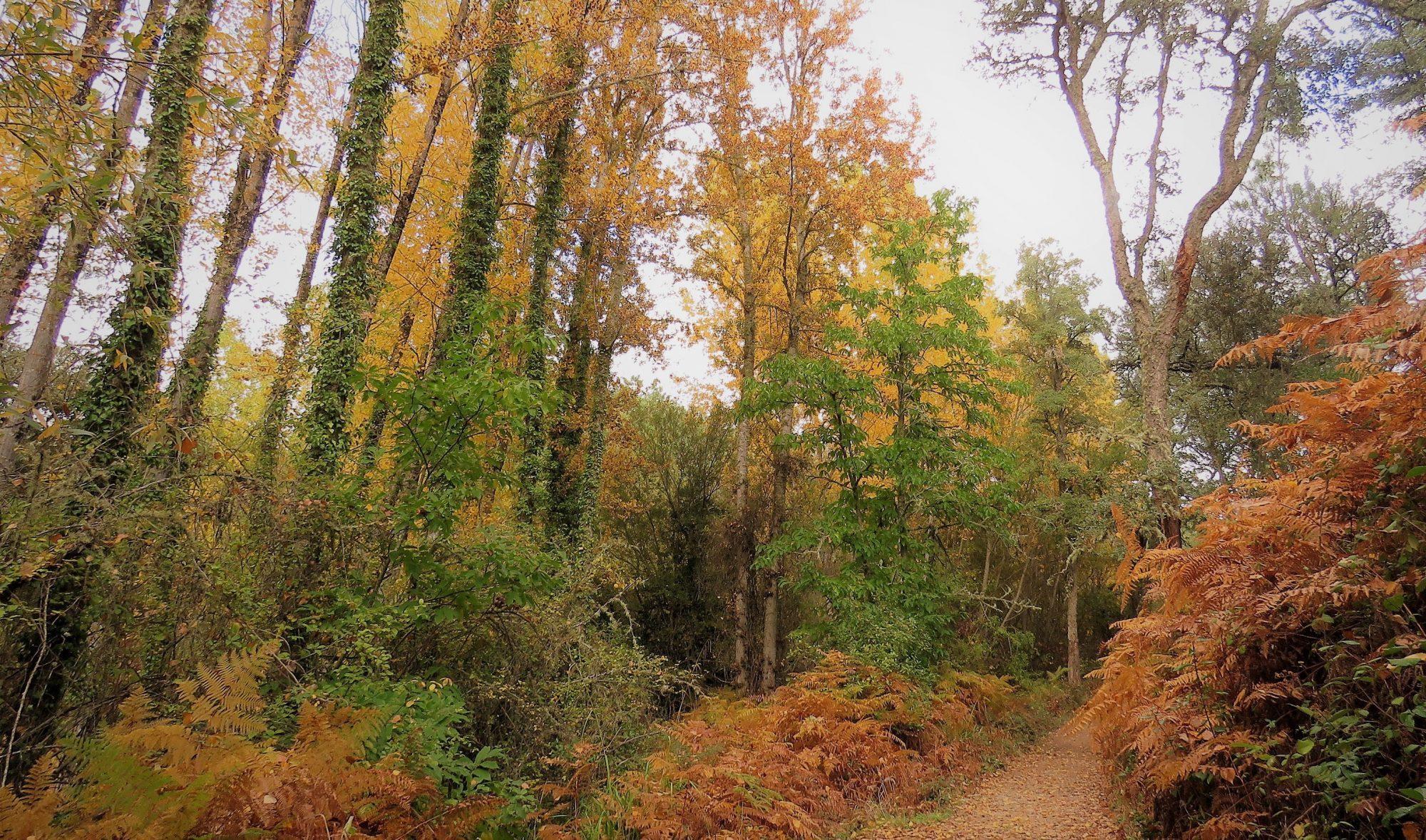 Sierra de Aracena Natural Park