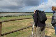 Observación de aves en Doñana Norte