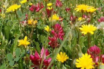 Flores silvestres mediterráneas
